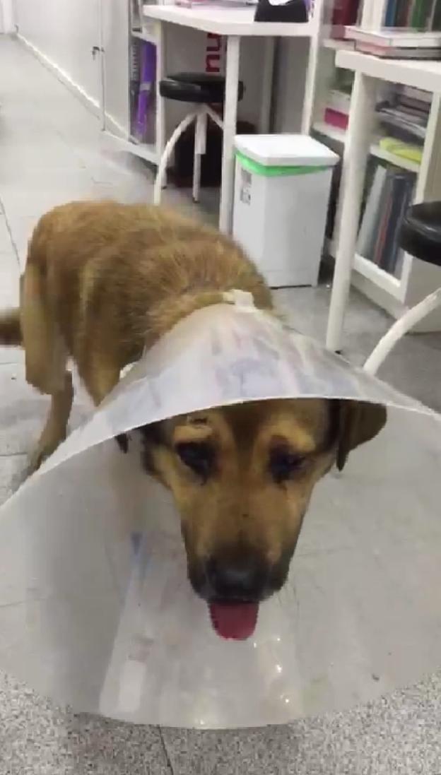 Basura se pone de perra en el calor en medellin para ser usada - 2 2