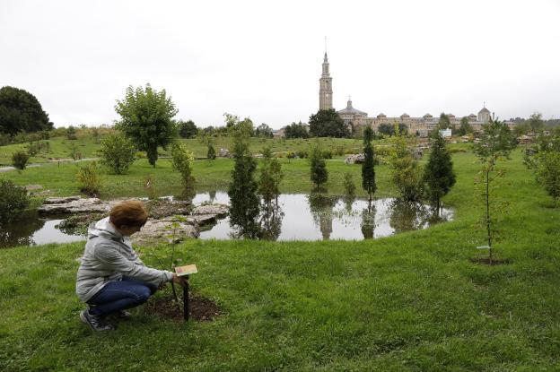 El Botanico Crece Con El Nuevo Bioma Boreal Y El Laberinto Vegetal