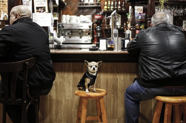 Mascota en un bar de La Felguera ataviada con una cazadora similar a la de su dueño. / JUAN CARLOS ROMÁN