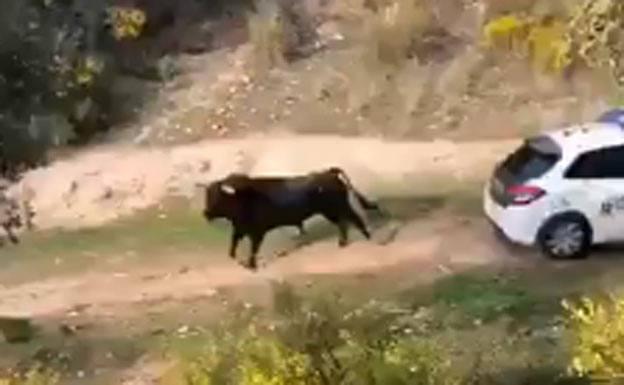 El vídeo del toro que embiste a la Guardia Civil que ha dado mucho que hablar